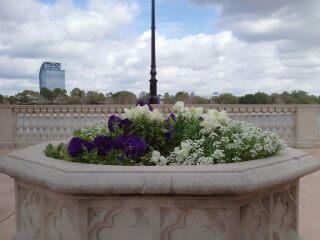 Flower Pot at Cranes Roost