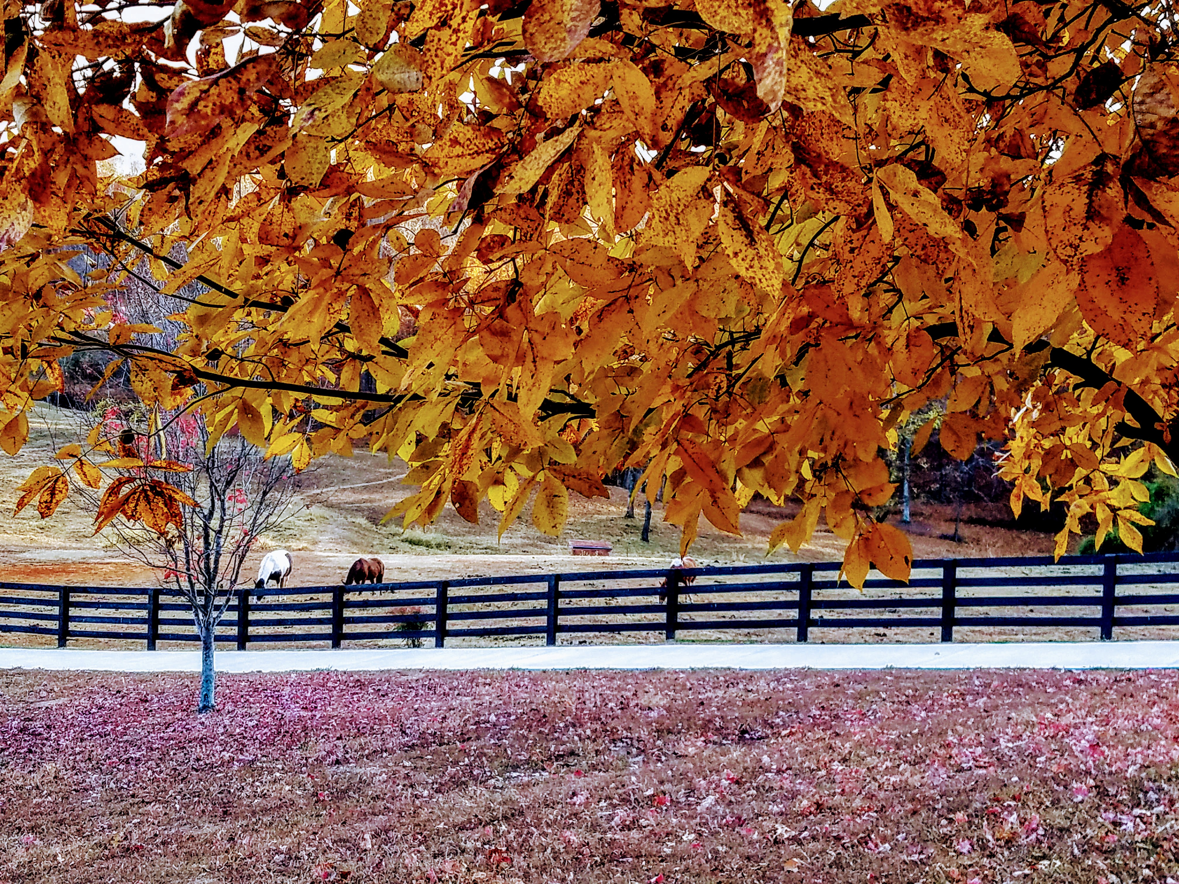Fall Fence Line – GraceSyllables